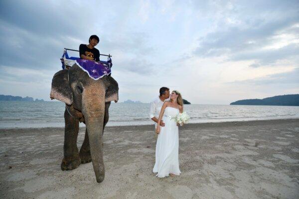 Krabi Beach Elephant Wedding